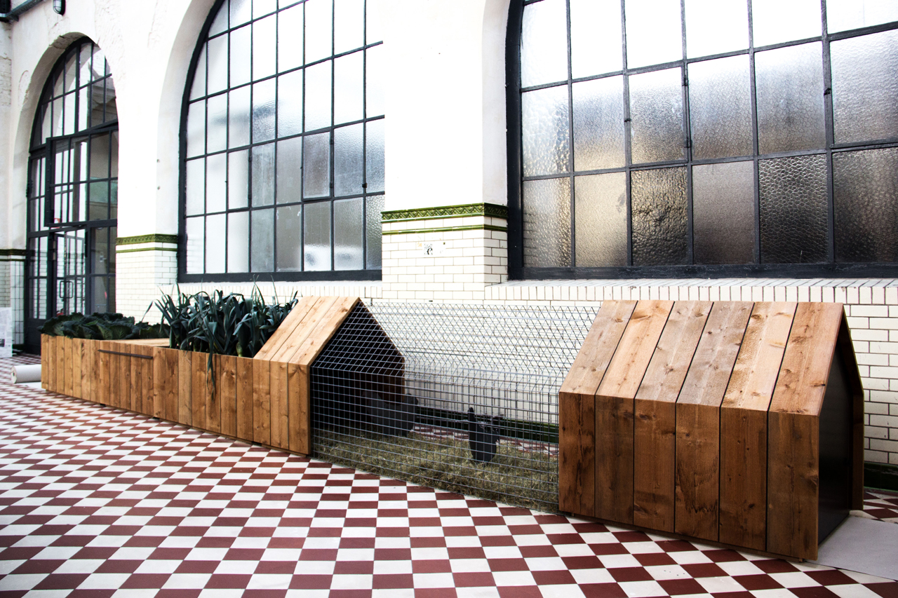 Daily-Needs_Chicken-Coop-StudioSegers_3